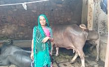 Manuben with her cow