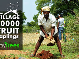 I am fundraising to plant trees and fruit trees in Sadu Koireng village to save from Warming Climate Changes and Environment