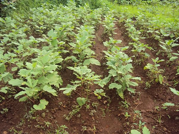 I am fundraising to sustained Livelihood for Farmers