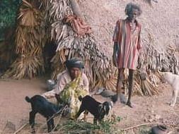 Support Livelihood activities of Tribal Women