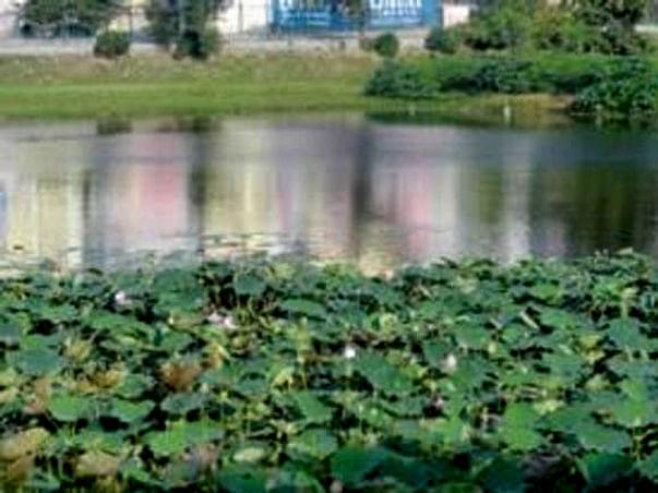 Bengaluru Marathon: Lake Restoration, Uttarahalli