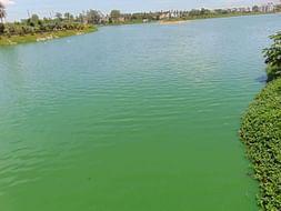 Bengaluru Marathon: Restoration of Allalasandra Lake