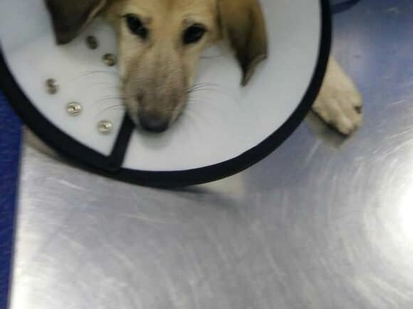 Help Ena, a dog beaten & thrown away with a broken leg