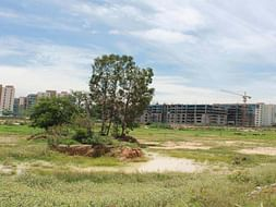 Peace Ride: Soulkere Lake Rejuvenation, Sarjapur Road