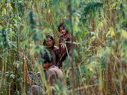 SAVE HEMP FARMERS Of HIMALAYA