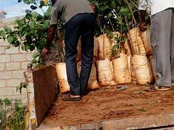 Help us plant 10 lakh trees around Bangalore