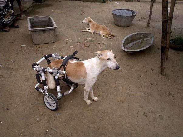Help Paralyzed Dogs Walk Again