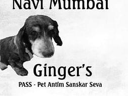 Ginger's PASS