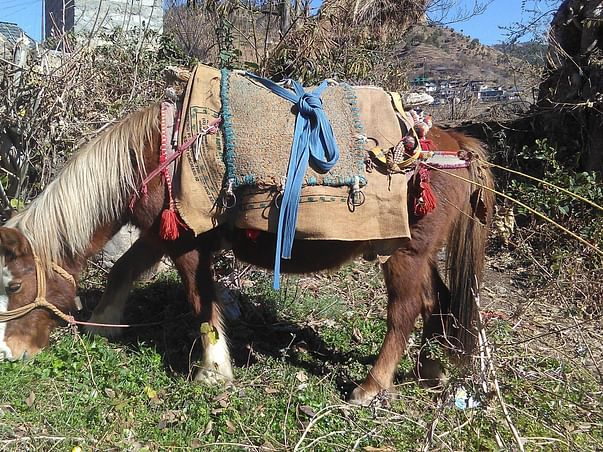 Lets Build A Home For Neelu, The Horse