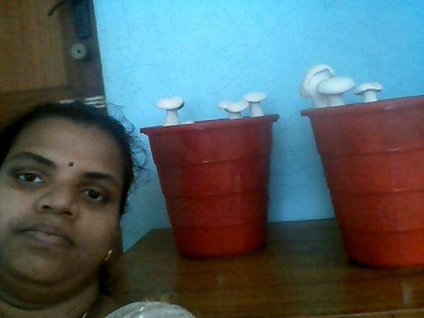 Help for Tejas Mushrooms Farm startup