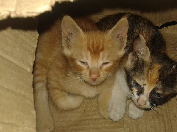 Help us Build A Foster Home for Cats @Gatinhofosters