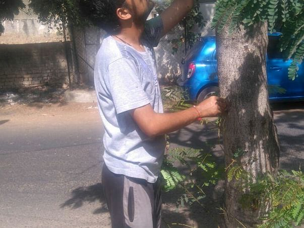 Being Energized for Saving Trees (BEST)