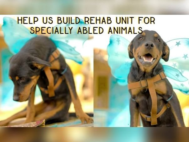 Help Build Rehab Unit For Specially-abled Animals