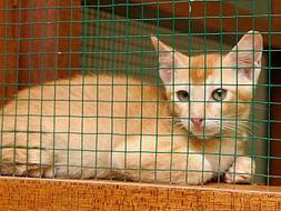 Help Us Build A Rehabilitation cum Adoption center For Animals