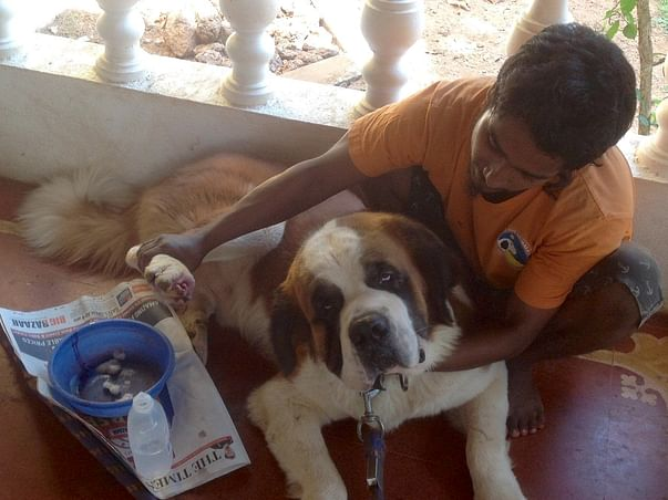 He Was Abandoned At Night With A Maggot Infested Wound In His Paw