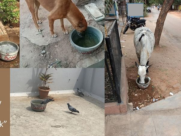 Support Animals Water Bowl Project (AWBP) INDIA