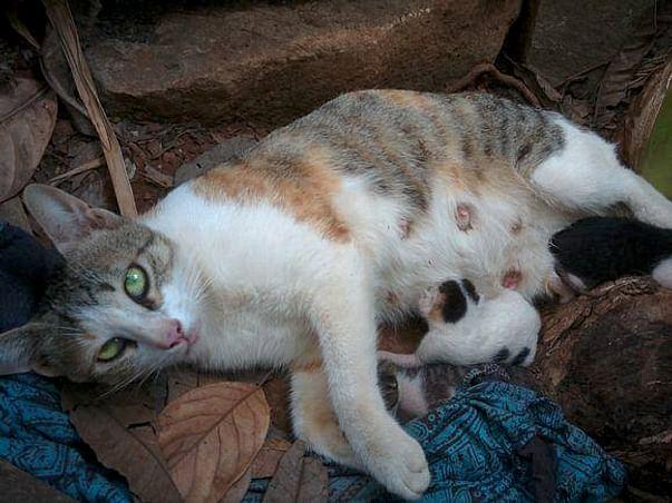 Kittens Lives Matter