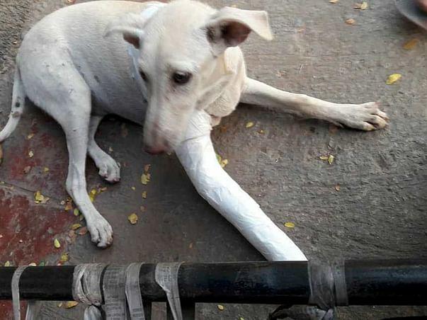 An Accident Has Crippled Gauri And She Needs Help To Run Again