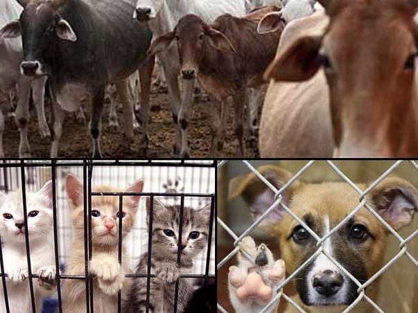 Help an Animal Shelter