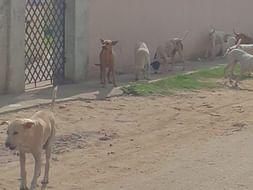 Feed Mongrels Near My Home
