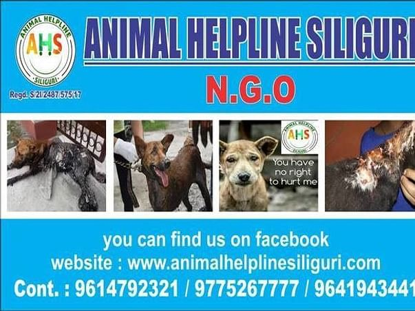 Help Animal Helpline Siliguri to continue to save Stray Animals