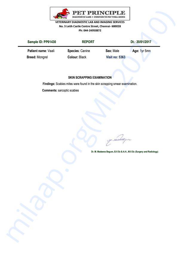 Vaali Report