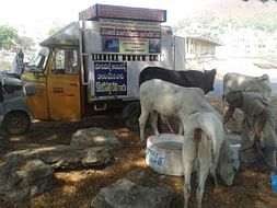 Help us Quench Thirst of Animals in Vijayawada this Summer