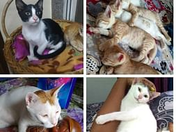 Help us care for stray Indicats and homeless kittens