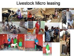 Lend a livestock - Empower an woman