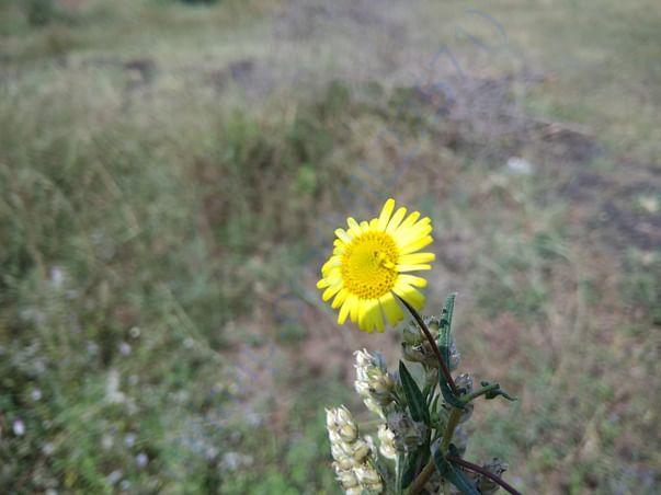 The sun on a flower