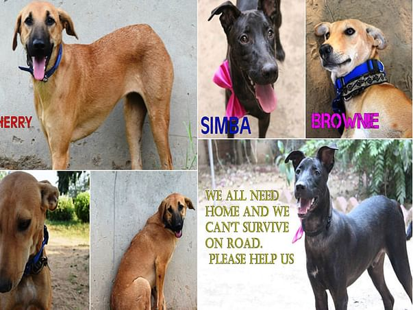 Simba, Cherry and Brownie all need your help!