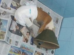 Help Rescue Dog Snoopy Get Back On His Feet After A Terrible Accident