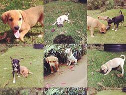 Help KSPCA 'S ABC/ ARV Program For Kodaikanal Dogs