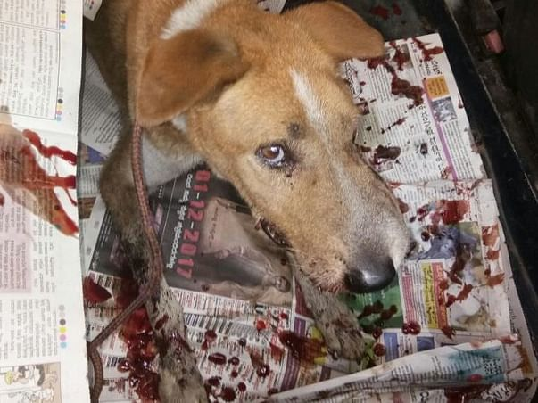 Help us to afford an ambulance to rescue injured dogs in Bangalore