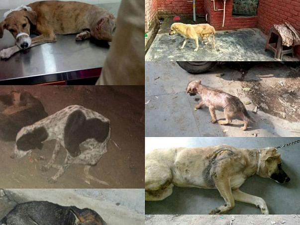 Plz help Jumbo/ Jimmy/ Sitara/ Romeo/ Situ & Family/ Chanda