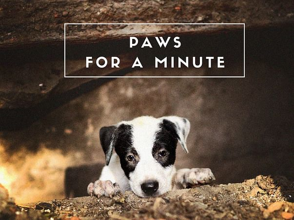 Please Paws for a Minute