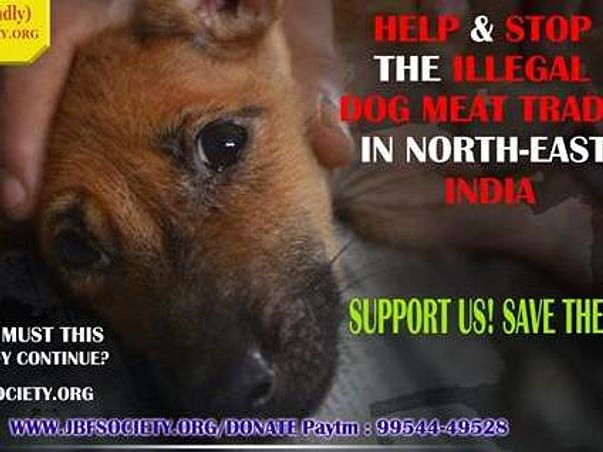 Help Provide The Dog Meat Trade Rescues a Good Life They Deserve