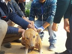 Accident prevention & Rabies control for the street dogs of Guwahati.