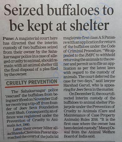 Seized Buffaloes