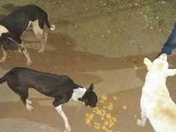 HelpMe Feed&Build Shelter for53 Speechless Straydogs NeedSupport#HELP