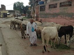 The Suffering Street Cows need, Food, Medical help, Shelter etc.....