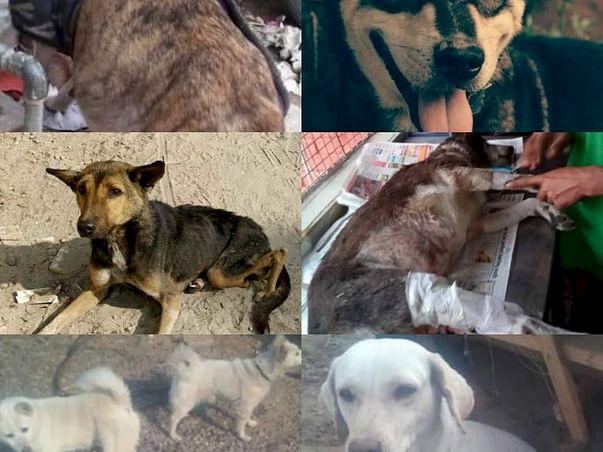 Help Kali/ Vodafone/ Chutney/ Jimmy/ Laila/ Choti Gauri/ Badi Gauri