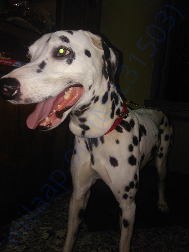 Rescued dog