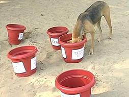 Water For Street Dogs And Other Animals And Birds