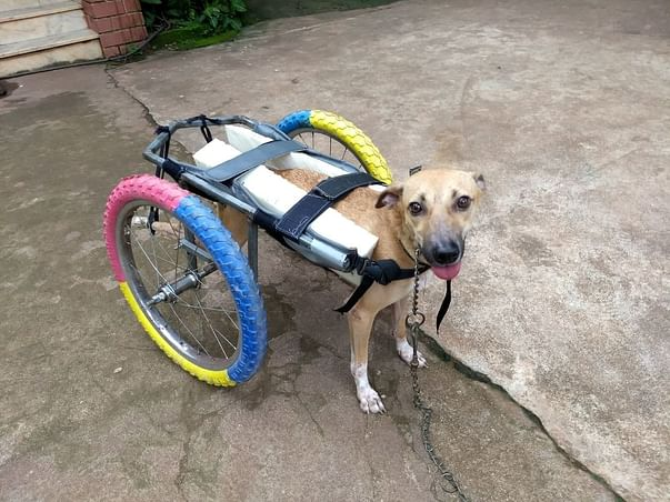 Help these rescued paralyzed dogs and cat