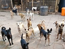 Haven of Miracles Enclave (H.O.M.E) Animal  Rescue shelter in Goa