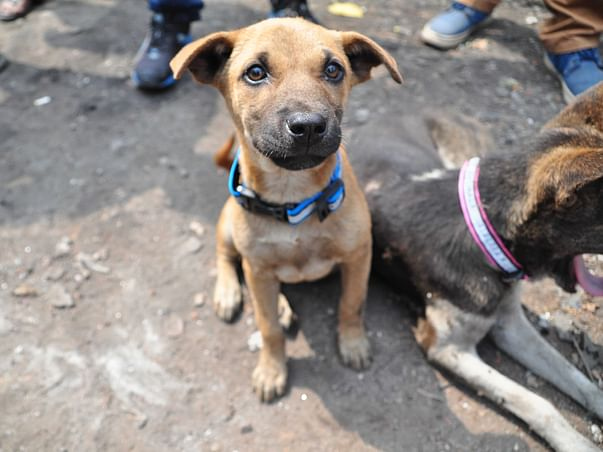 Animals Need Importance Mercy Aid Love and Shelter