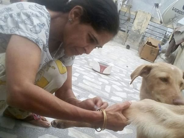Help Anita Save Stray Dogs In Delhi