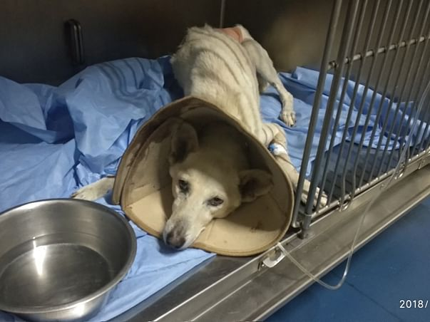 Save Susie The Adorable Indie
