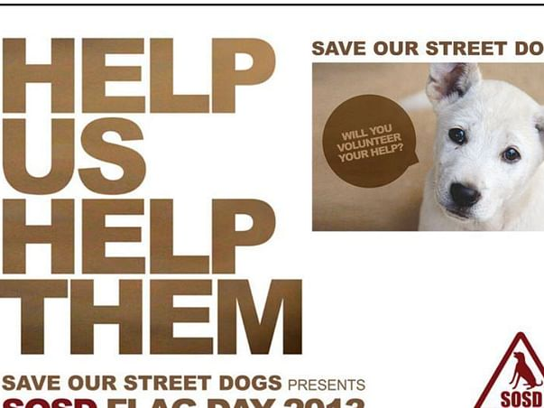 Help the poor street dogs for their treatment
